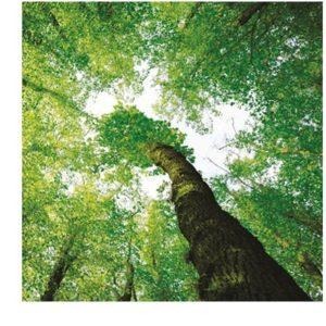 Čtyři ekologické cíle společnosti Xerox